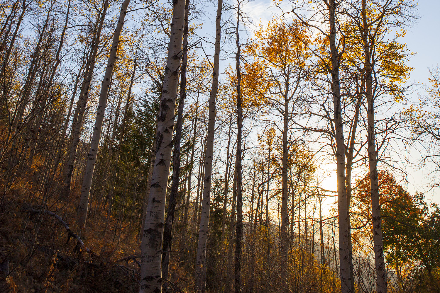 Best Fall Hikes in Sun Valley, Idaho